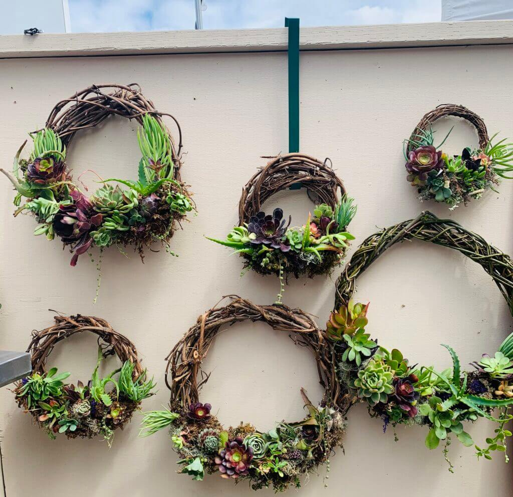 collection of grapevine succulent wreaths