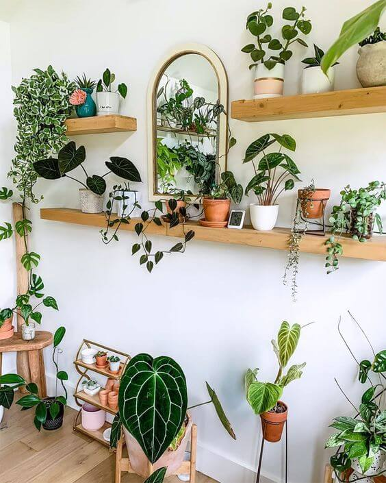 shelves filled with plants
