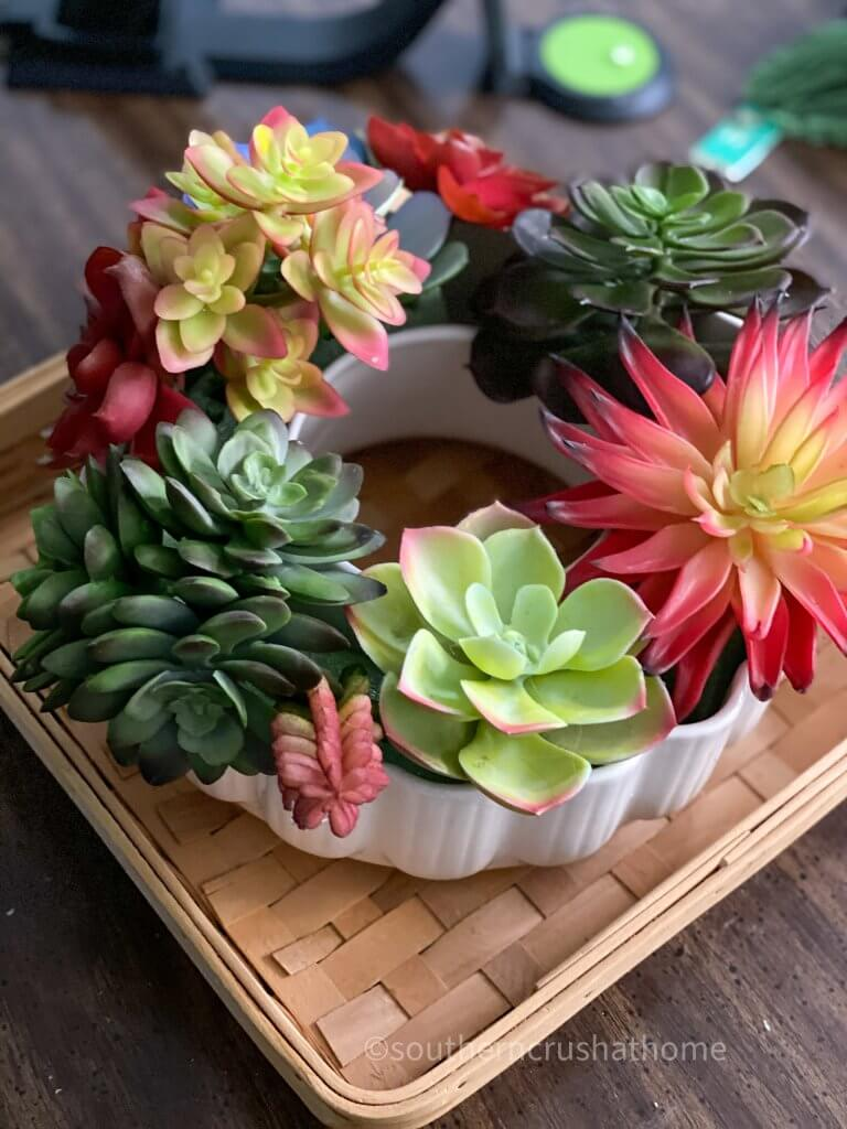 close up of succulents in mold