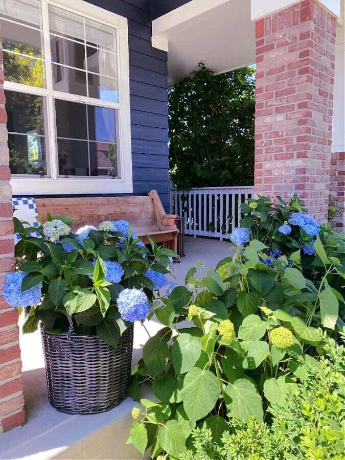 hydrangeas on front porch