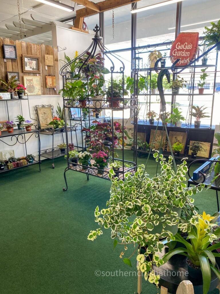 live plants for sale on display